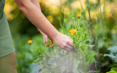 Tips om jouw kruidenweitje zo goed mogelijk te laten groeien